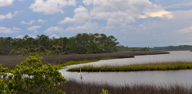 Unspoiled nature in den state parks in Florida